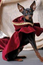 Ausstellungsstück: Hundeumhang aus Baumwollsamt
